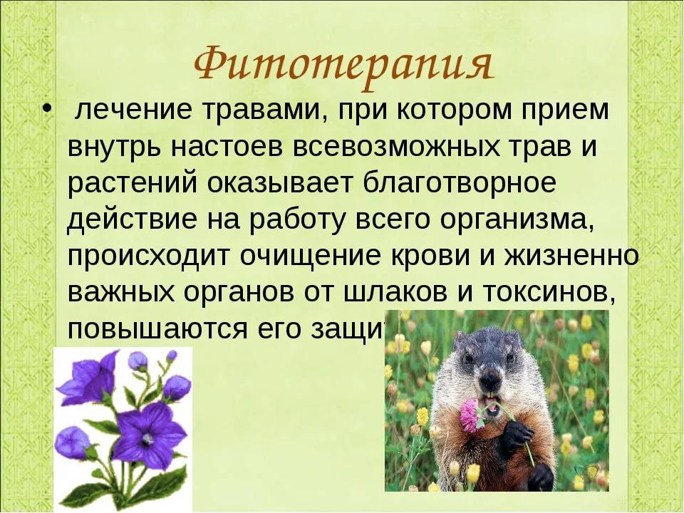 История фитотерапии в россии