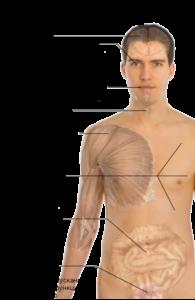 Как лечить рассеянный склероз